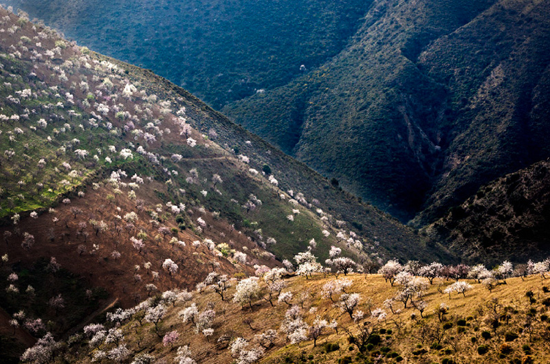slides/03Valley_of_Almond_trees.jpg  03Valley_of_Almond_trees